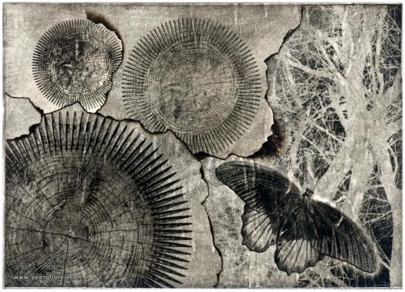 Obra vendida en la exposición: Desarrollo sostenible. Collage y técnica mixta sobre papel. 13x18 cm.