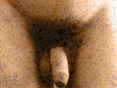 Masculino. Collage digital.