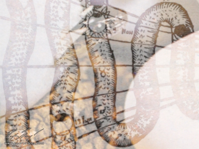 Serpentín # 1. Collage digital.