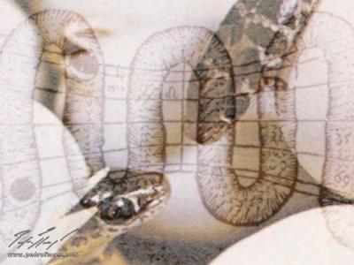 Serpentín # 2. Collage digital.